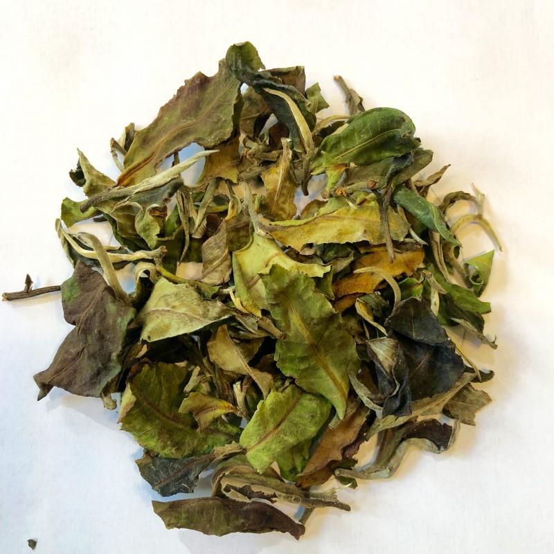 Thé blanc du Yunnan Bio